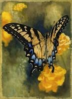 Delicate Belle Fine-Art Print