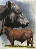 Angus Cattle Fine-Art Print