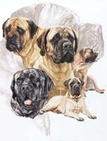 Bull Mastiff with Ghost Fine-Art Print
