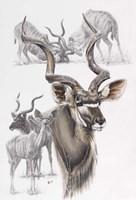 Kudu Fine-Art Print