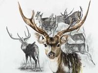 Axis Deer Fine-Art Print