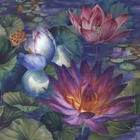 Moonlit Lily Pond Fine-Art Print