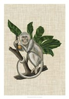 Canopy Monkey II Fine-Art Print