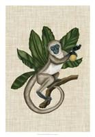 Canopy Monkey III Fine-Art Print