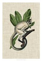 Canopy Monkey IV Fine-Art Print