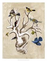 The Ornithologist's Dream II Fine-Art Print
