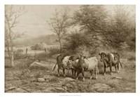 Grazing Cattle Fine-Art Print