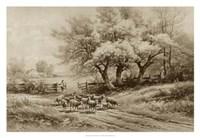 Herding Sheep Fine-Art Print