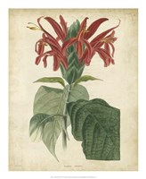 Tropical Floral V Fine-Art Print