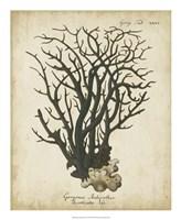 Esper Antique Coral I Fine-Art Print