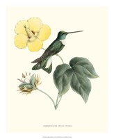 Hummingbird & Bloom I Fine-Art Print