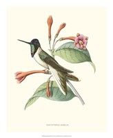 Hummingbird & Bloom IV Fine-Art Print