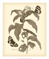 Nature Study in Sepia I Fine-Art Print