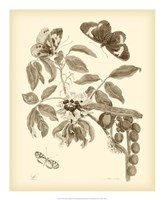 Nature Study in Sepia II Fine-Art Print
