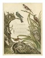 Sanctuary for Birds Fine-Art Print