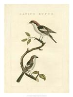 Nozeman Birds I Fine-Art Print