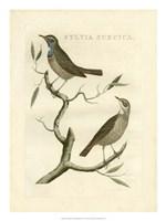Nozeman Birds II Fine-Art Print