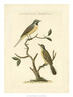Nozeman Birds III Fine-Art Print