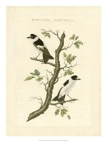 Nozeman Birds IV Fine-Art Print