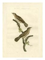 Nozeman Birds V Fine-Art Print