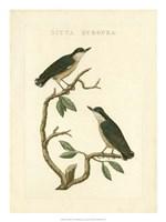 Nozeman Birds VI Fine-Art Print