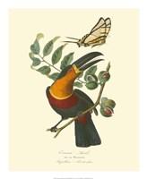Nature Jardin III Fine-Art Print