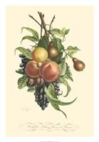 Plentiful Fruits I Fine-Art Print