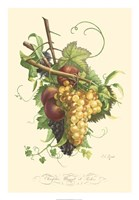 Plentiful Fruits II Fine-Art Print