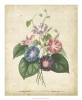 Victorian Bouquet I Fine-Art Print