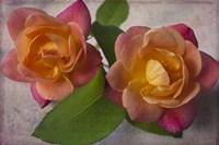 Two Roses Fine-Art Print
