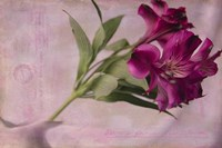 Forever Fuchsia Fine-Art Print
