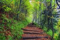 Appalachian Trail 3 Fine-Art Print