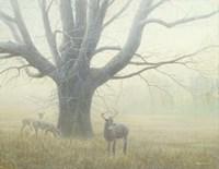 Winter Mist Fine-Art Print