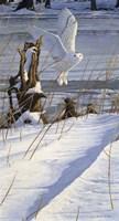 Great White Hunter Fine-Art Print