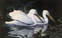 Pelicans Fine-Art Print