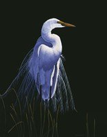 Common Egret In Breeding Plumage Fine-Art Print