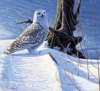 Winter Snow Fine-Art Print