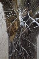 Winter Branches Fine-Art Print
