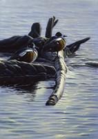 Harlequin Ducks Fine-Art Print