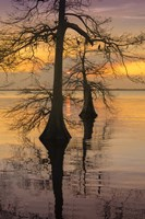 Two Trees on Water Fine-Art Print