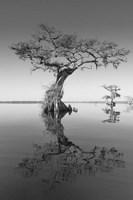 Trees at Lake 2 Fine-Art Print