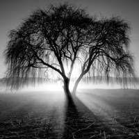 Lighting Tree Fine-Art Print