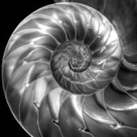 Nautilus 4 Fine-Art Print