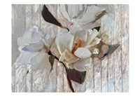 Magnolia1 Fine-Art Print