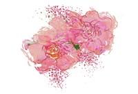 Pink Peonies Fine-Art Print