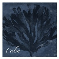 Blue Water Coral Calm Fine-Art Print