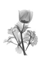 Lonely Anemone Fine-Art Print