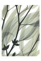 Eucalyptus Safari Fine-Art Print