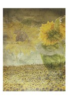 Dear Sunflower Field Fine-Art Print
