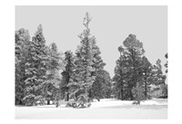 Forest Freeze BW Fine-Art Print